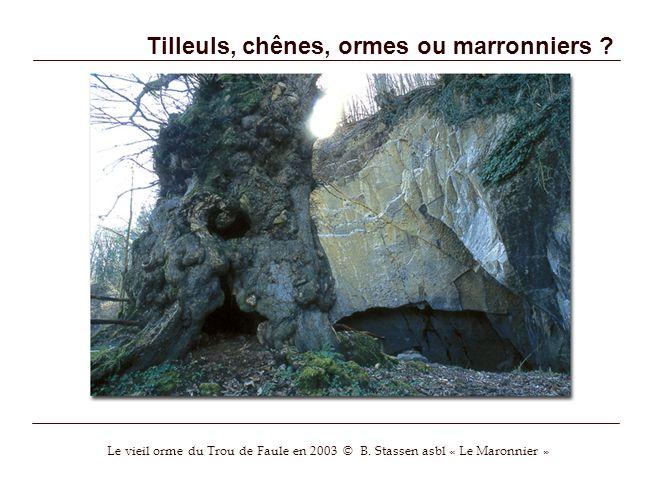 Tilleuls, chênes, ormes ou marronniers ? Le vieil orme du Trou de Faule en 2003 © B. Stassen asbl « Le Maronnier »