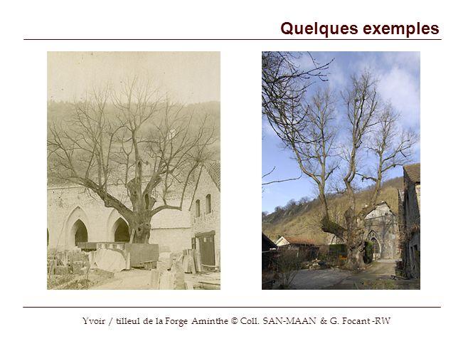 Quelques exemples Yvoir / tilleul de la Forge Aminthe © Coll. SAN-MAAN & G. Focant -RW