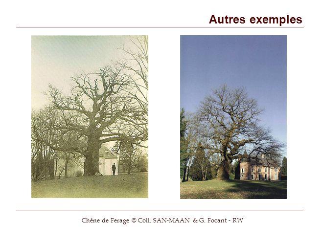Autres exemples Chêne de Ferage © Coll. SAN-MAAN & G. Focant - RW