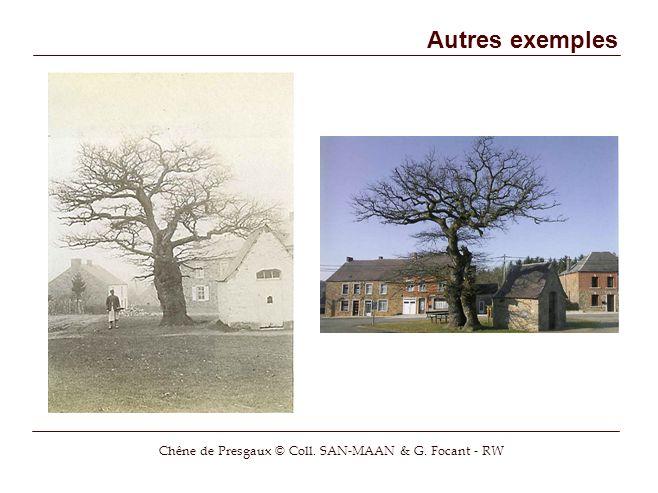 Autres exemples Chêne de Presgaux © Coll. SAN-MAAN & G. Focant - RW