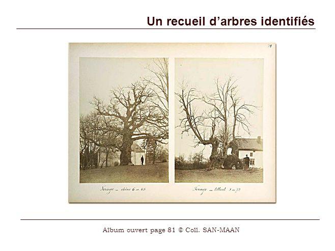 Un recueil darbres identifiés Album ouvert page 81 © Coll. SAN-MAAN