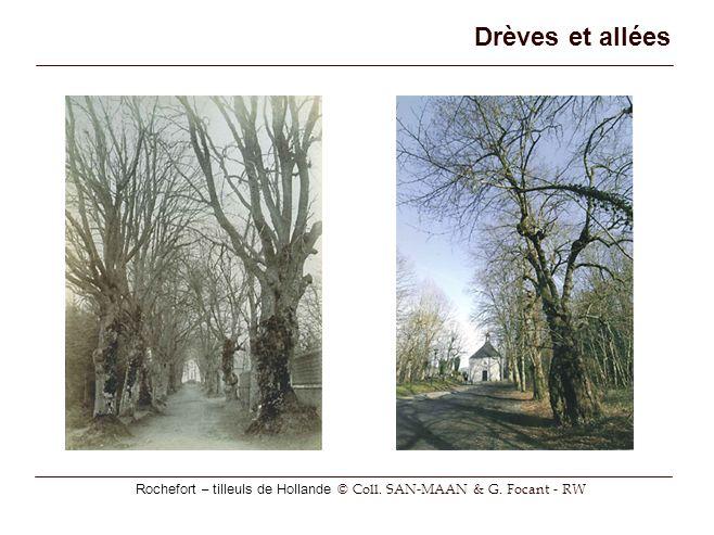 Drèves et allées Rochefort – tilleuls de Hollande © Coll. SAN-MAAN & G. Focant - RW
