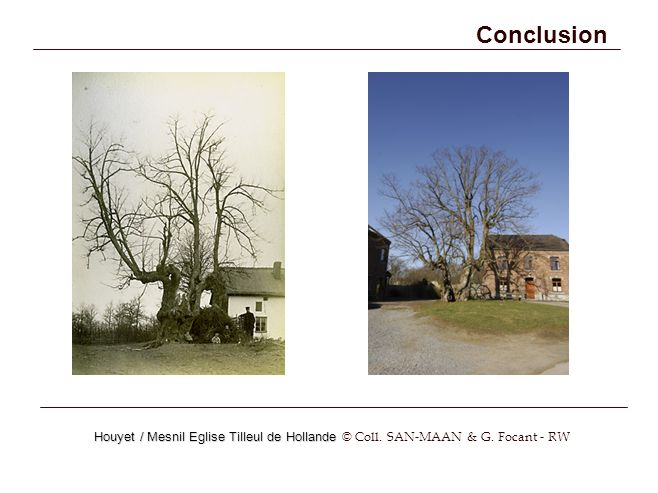 Conclusion Houyet / Mesnil Eglise Tilleul de Hollande Houyet / Mesnil Eglise Tilleul de Hollande © Coll.