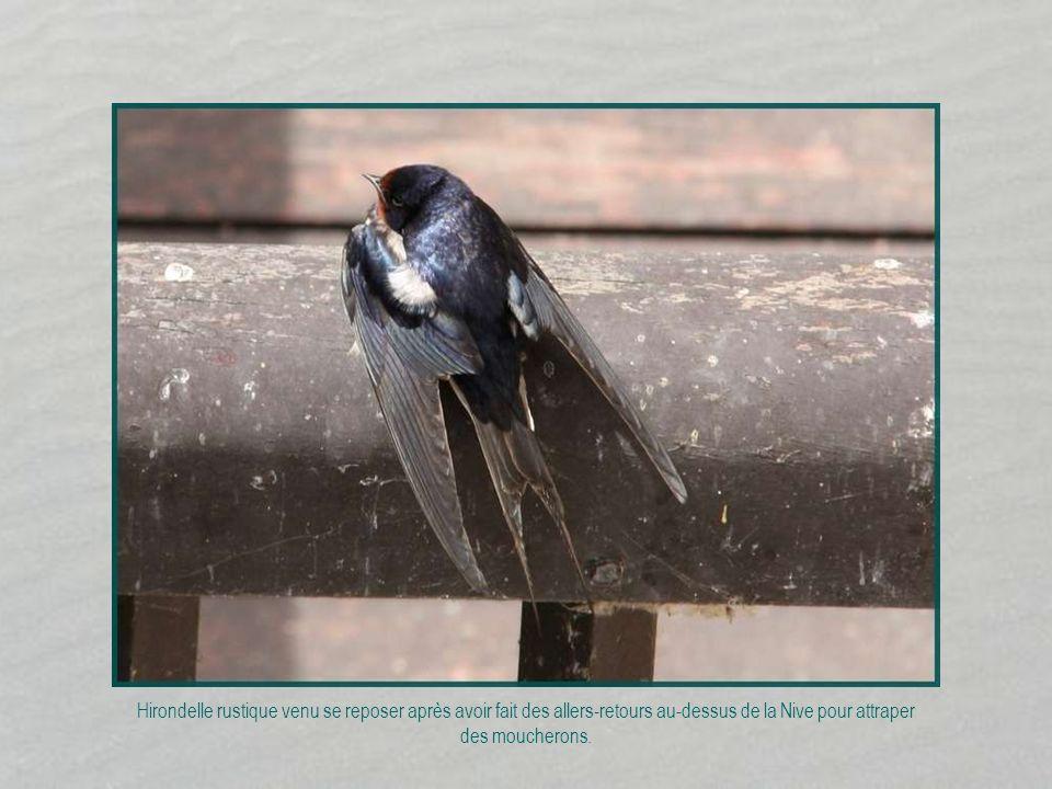 F I N Mes diaporamas sont hébergés sur le site de : www.imagileonation.com Photos personnelles et création Rosemarie Octobre 2013 Informations prises