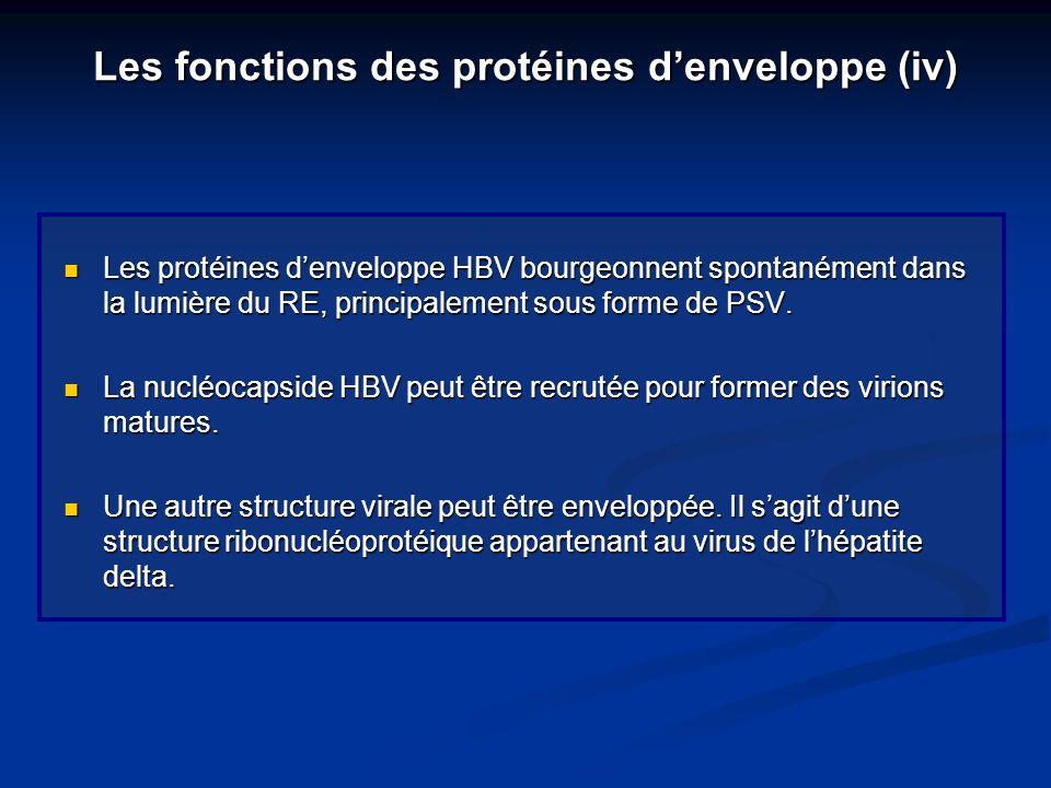 Les fonctions des protéines denveloppe (iv) Les protéines denveloppe HBV bourgeonnent spontanément dans la lumière du RE, principalement sous forme de
