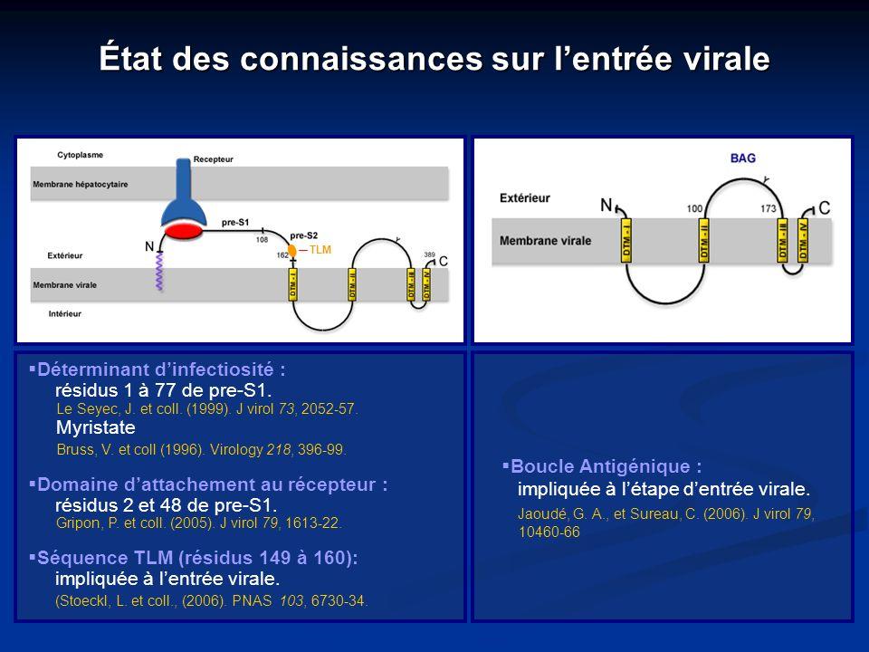 État des connaissances sur lentrée virale Boucle Antigénique : impliquée à létape dentrée virale. Jaoudé, G. A., et Sureau, C. (2006). J virol 79, 104
