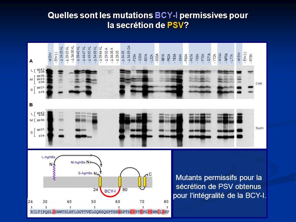 Quelles sont les mutations BCY-I permissives pour la secrétion de PSV? Mutants permissifs pour la sécrétion de PSV obtenus pour lintégralité de la BCY