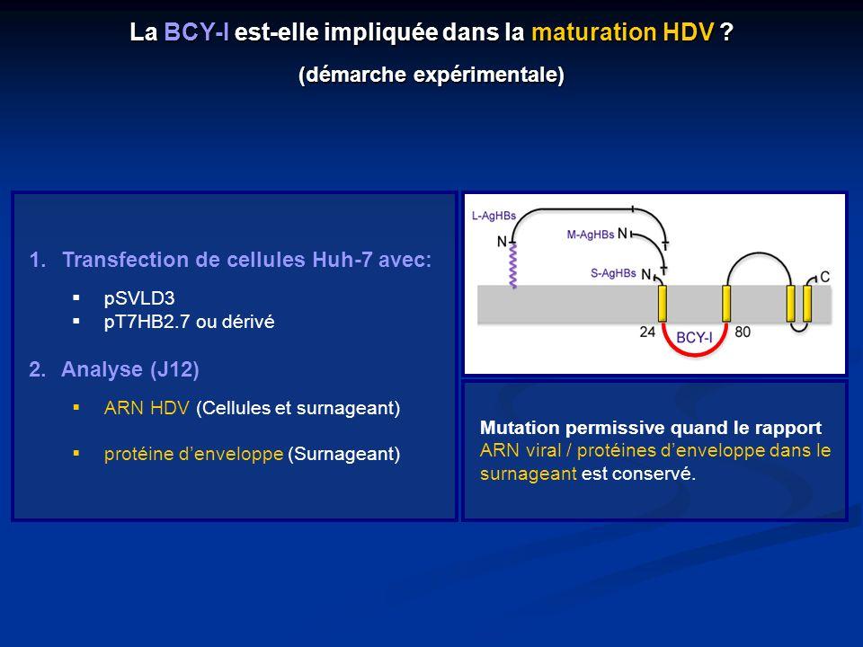 1.Transfection de cellules Huh-7 avec: pSVLD3 pT7HB2.7 ou dérivé 2.Analyse (J12) ARN HDV (Cellules et surnageant) protéine denveloppe (Surnageant) Mut