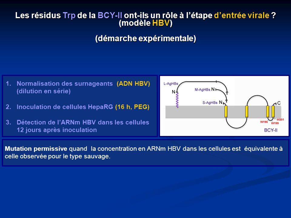 1.Normalisation des surnageants (ADN HBV) (dilution en série) 2.Inoculation de cellules HepaRG (16 h, PEG) 3.Détection de lARNm HBV dans les cellules