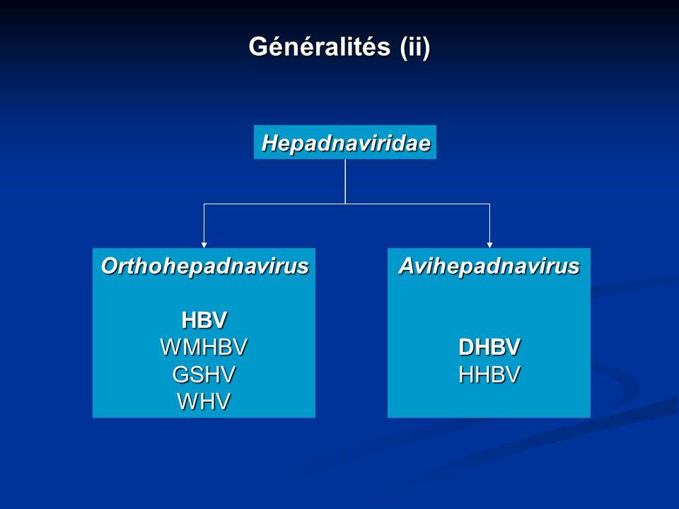 Généralités (ii) Hepadnaviridae OrthohepadnavirusHBVWMHBVGSHVWHVAvihepadnavirusDHBVHHBV