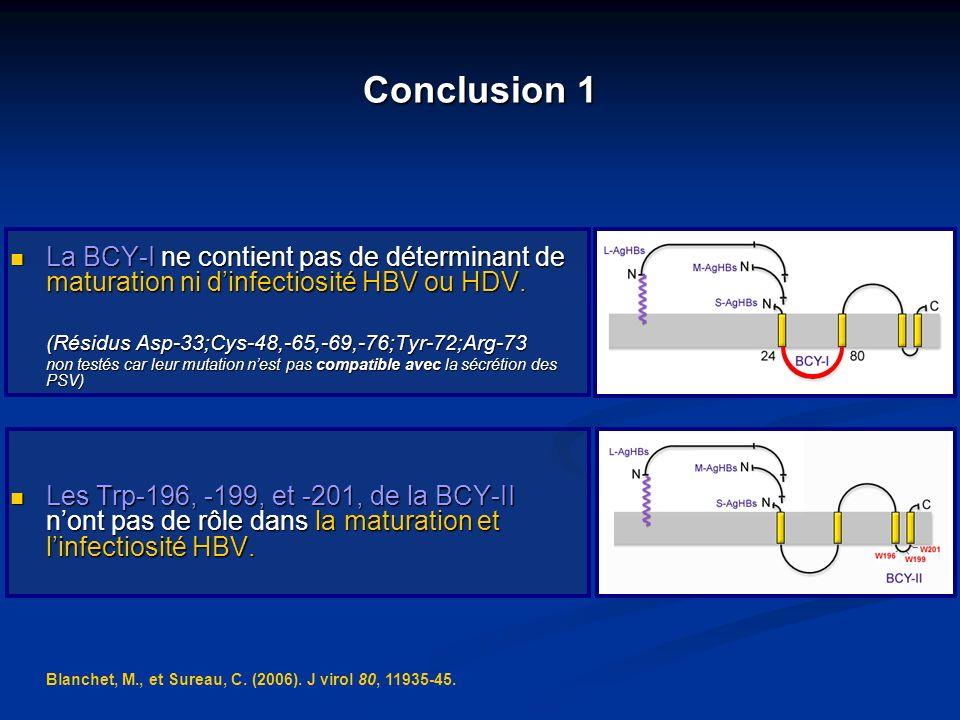 Conclusion 1 La BCY-I ne contient pas de déterminant de maturation ni dinfectiosité HBV ou HDV. La BCY-I ne contient pas de déterminant de maturation