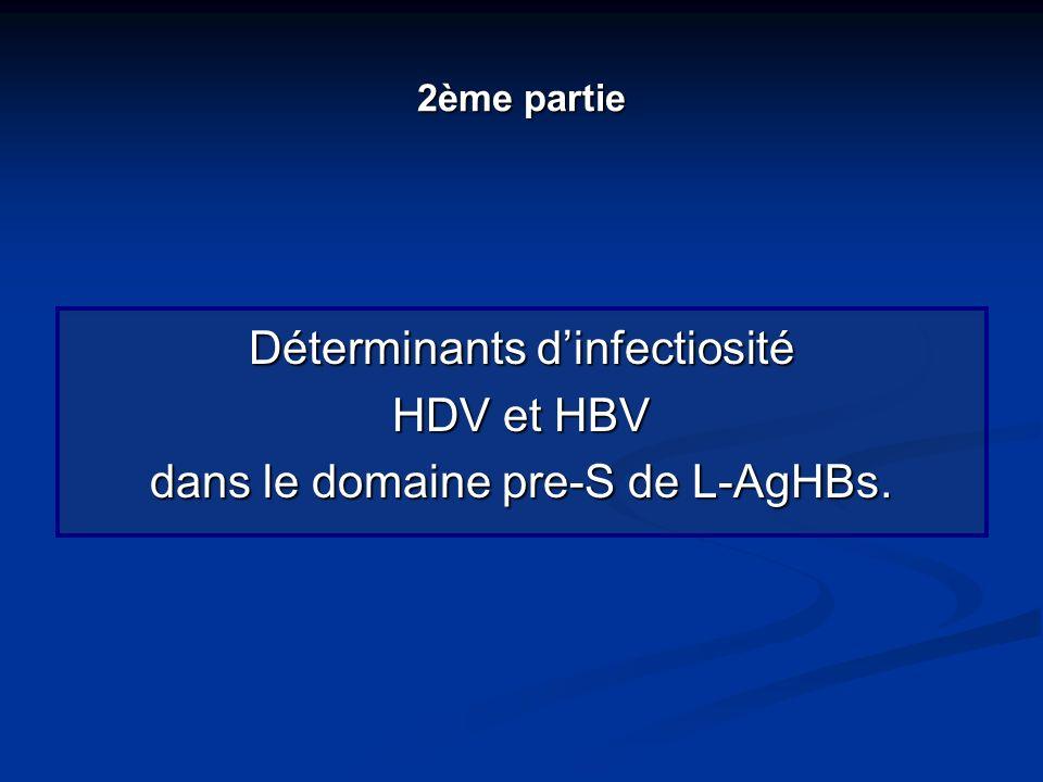 2ème partie Déterminants dinfectiosité HDV et HBV dans le domaine pre-S de L-AgHBs.