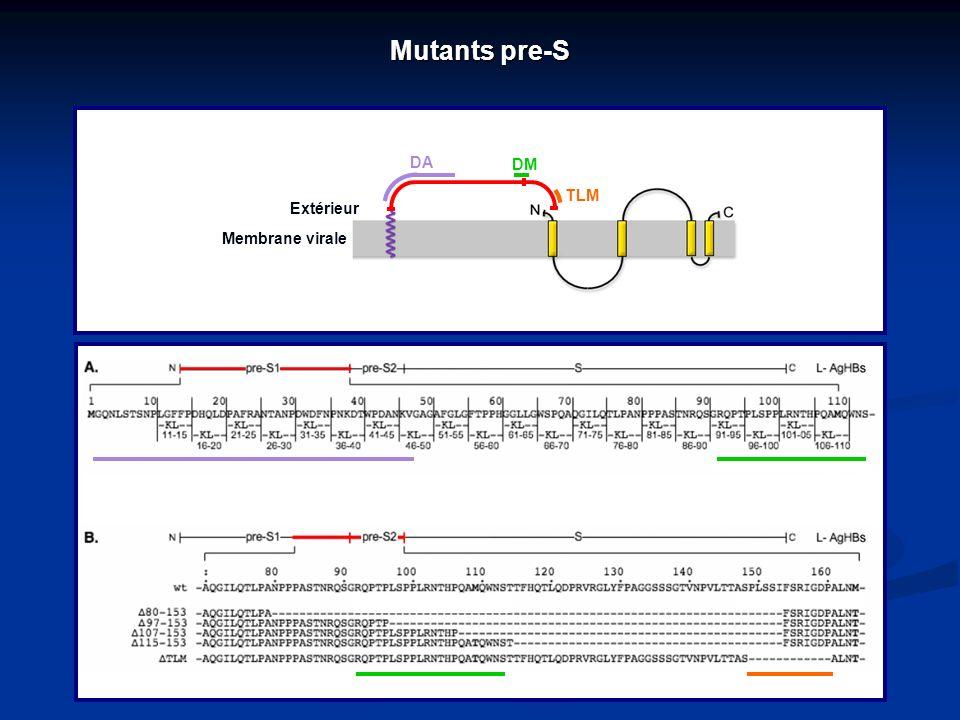 Mutants pre-S Extérieur Membrane virale DA DM TLM