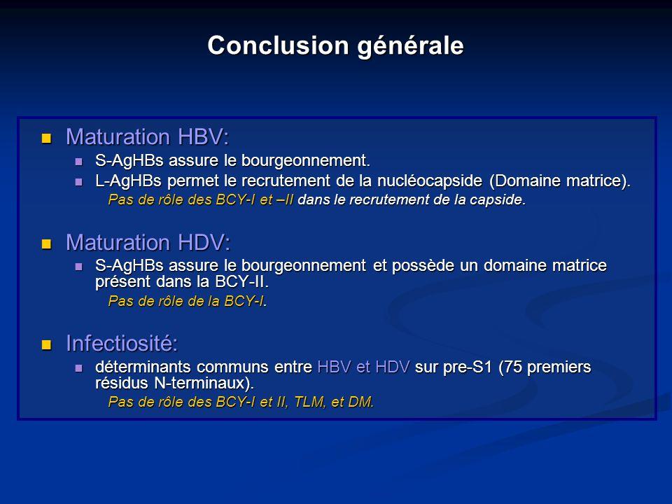 Maturation HBV: Maturation HBV: S-AgHBs assure le bourgeonnement. S-AgHBs assure le bourgeonnement. L-AgHBs permet le recrutement de la nucléocapside
