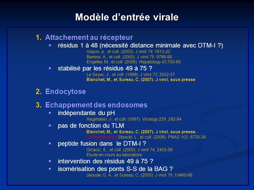 Modèle dentrée virale 1.Attachement au récepteur résidus 1 à 48 (nécessité distance minimale avec DTM-I ?) Gripon, p., et coll. (2005). J virol 79, 16