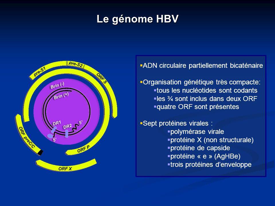 Le génome HBV ADN circulaire partiellement bicaténaire Organisation génétique très compacte: tous les nucléotides sont codants les ¾ sont inclus dans