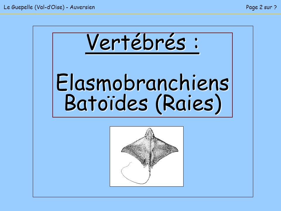 Le Guepelle (Val-dOise) - AuversienPage 2 sur ? Vertébrés : Elasmobranchiens Batoïdes (Raies)