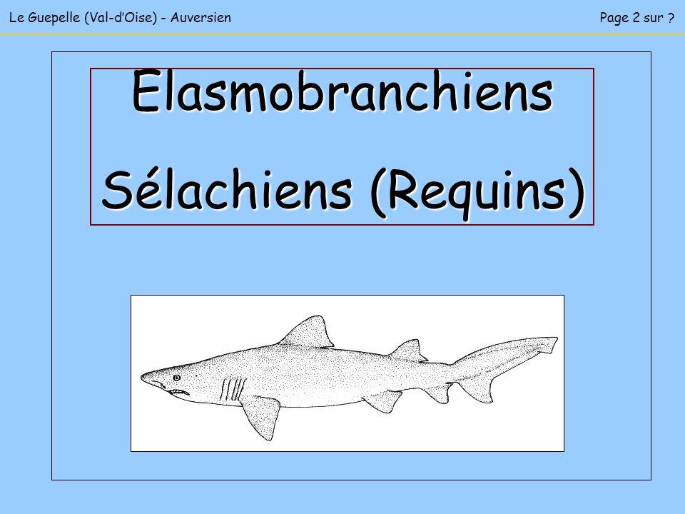 Le Guepelle (Val-dOise) - AuversienPage 2 sur ? Elasmobranchiens Sélachiens (Requins)