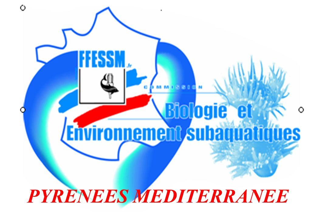 PYRENEES MEDITERRANEE