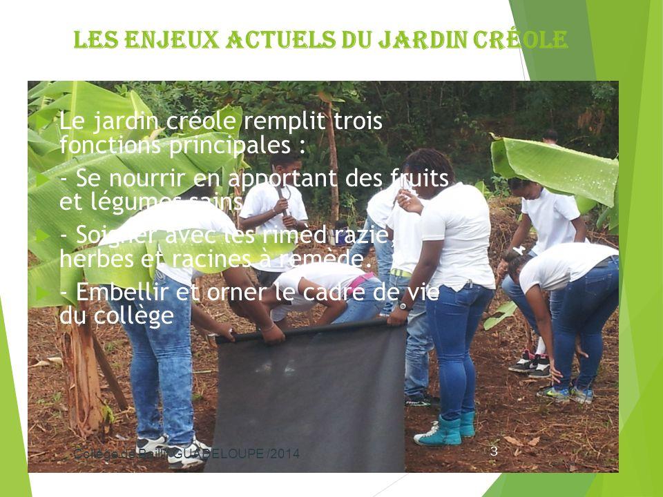 Les enjeux actuels du jardin créole Le jardin créole remplit trois fonctions principales : - Se nourrir en apportant des fruits et légumes sains. - So