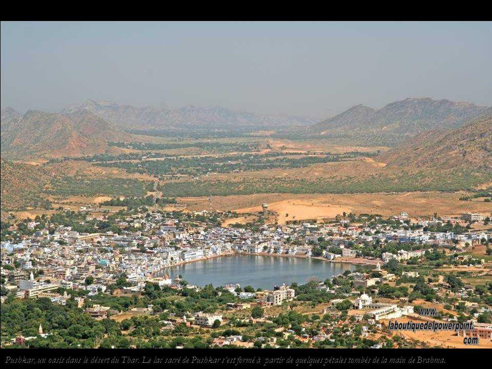 Singes près de Pushkar.