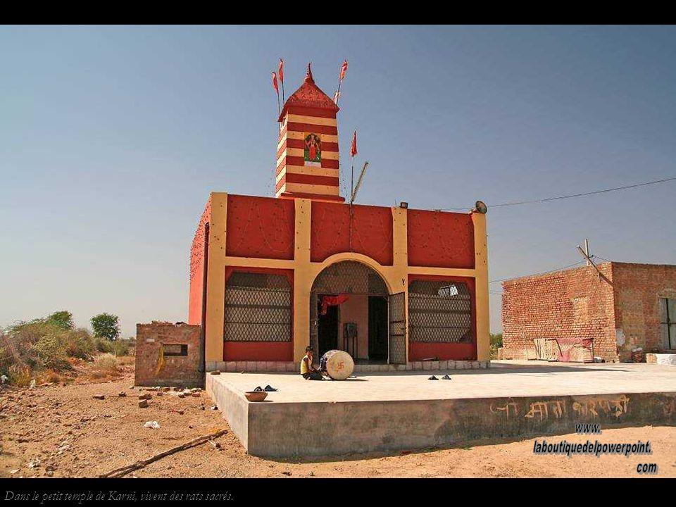 Pélerins près de Bikaner. Les pélerins peuvent parcourir des centaines de kilomètres, de temple en temple.