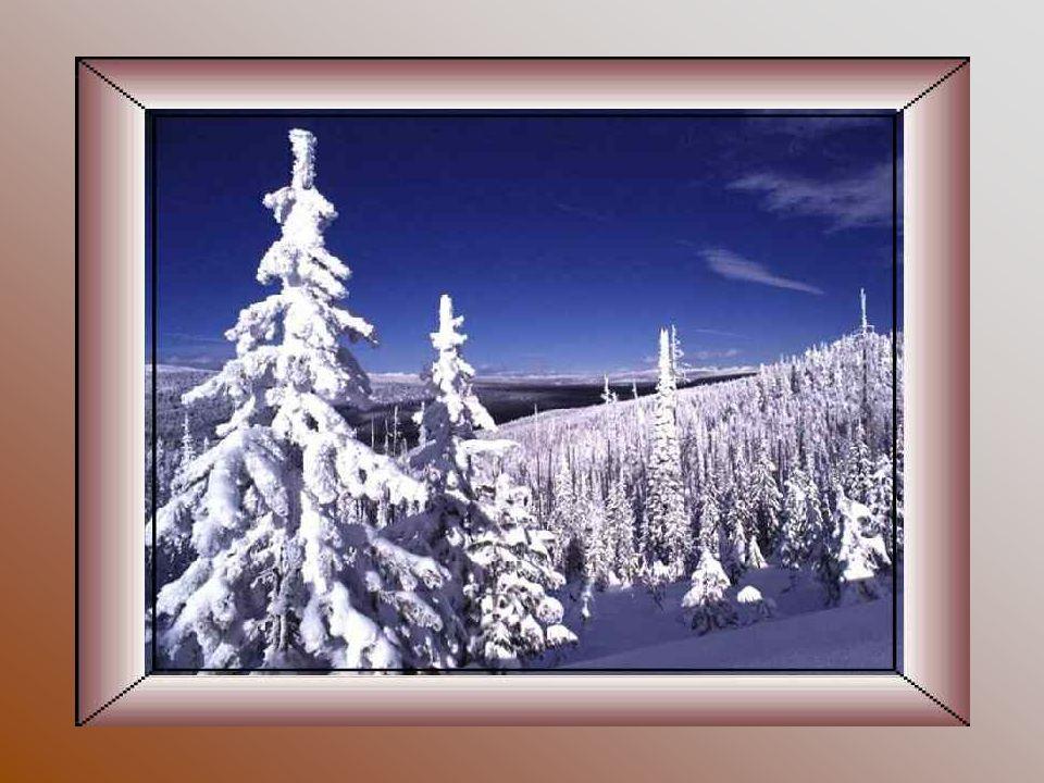 Le Canada a deux saisons, lhiver et le mois de Juillet. Robert Hollier