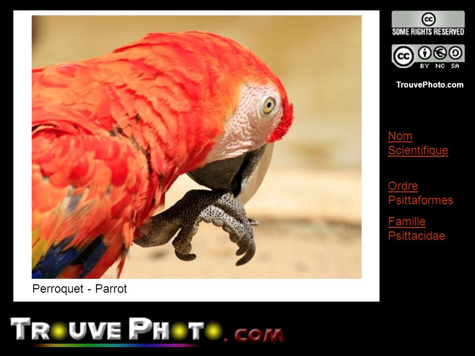 TrouvePhoto.com Perroquet - Parrot Nom Scientifique Ordre Psittaformes Famille Psittacidae