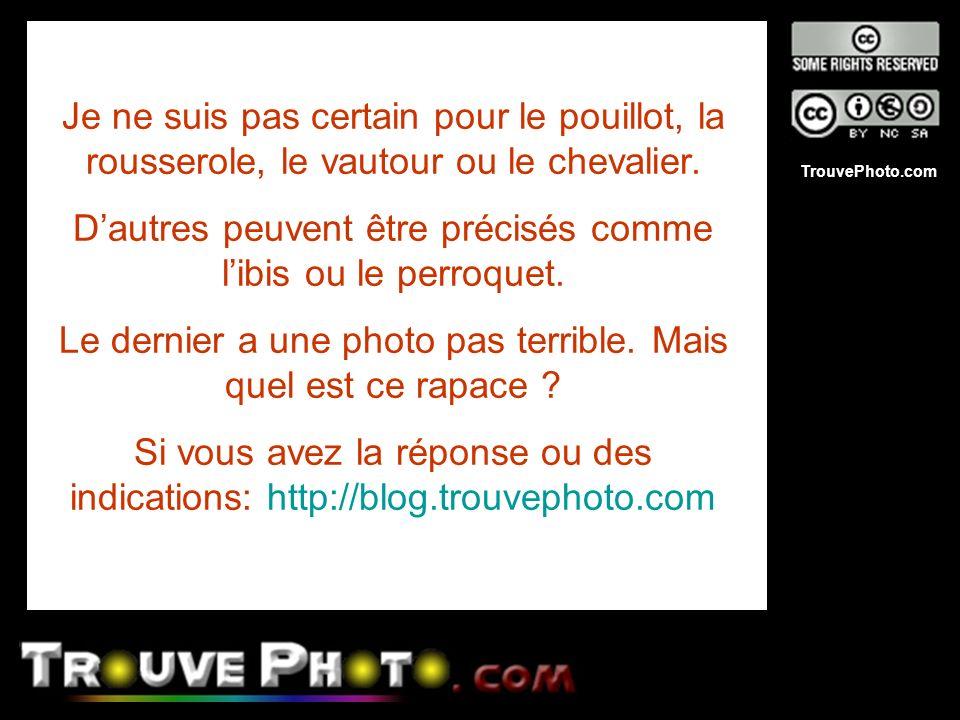 TrouvePhoto.com Je ne suis pas certain pour le pouillot, la rousserole, le vautour ou le chevalier. Dautres peuvent être précisés comme libis ou le pe