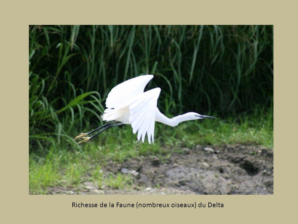 Le Delta (le plus grand dEurope) Réserve biosphère Unesco