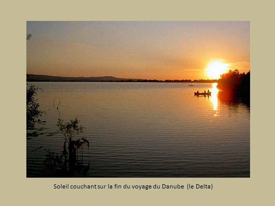 Richesse de la Faune (nombreux oiseaux) du Delta