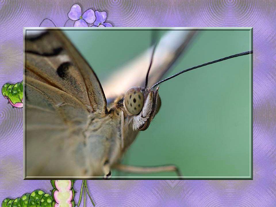 Même pour le simple envol d un papillon, tout le ciel est nécessair e.