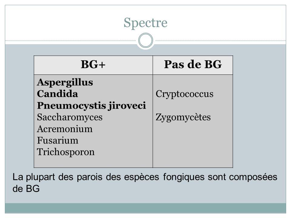 Spectre BG+Pas de BG Aspergillus Candida Pneumocystis jiroveci Saccharomyces Acremonium Fusarium Trichosporon Cryptococcus Zygomycètes La plupart des parois des espèces fongiques sont composées de BG