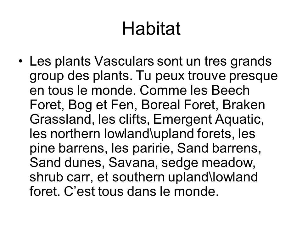 Habitat Les plants Vasculars sont un tres grands group des plants. Tu peux trouve presque en tous le monde. Comme les Beech Foret, Bog et Fen, Boreal