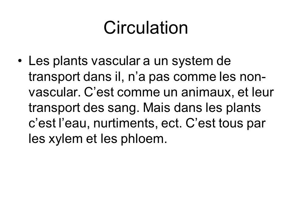 Circulation Les plants vascular a un system de transport dans il, na pas comme les non- vascular. Cest comme un animaux, et leur transport des sang. M
