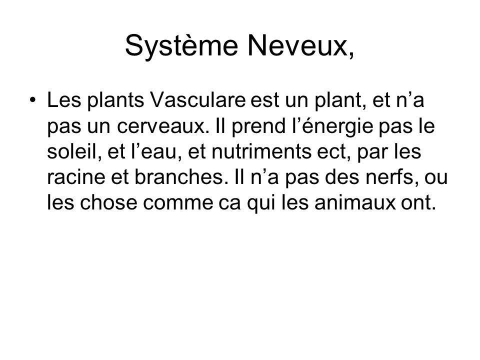Système Neveux, Les plants Vasculare est un plant, et na pas un cerveaux. Il prend lénergie pas le soleil, et leau, et nutriments ect, par les racine