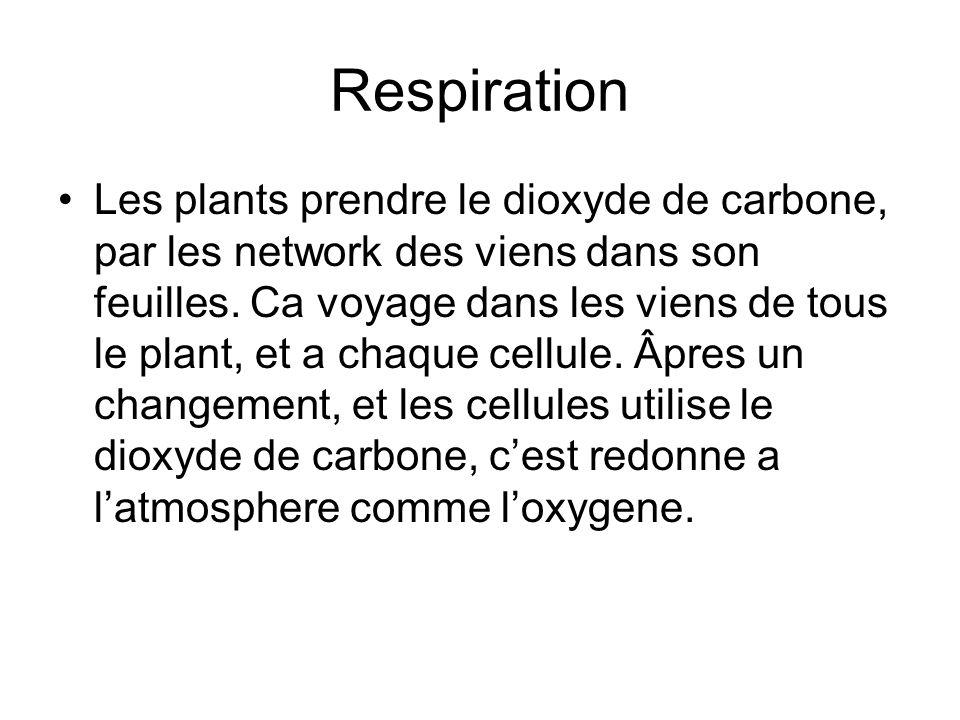Respiration Les plants prendre le dioxyde de carbone, par les network des viens dans son feuilles. Ca voyage dans les viens de tous le plant, et a cha
