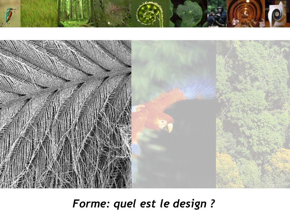 Forme: quel est le design ?