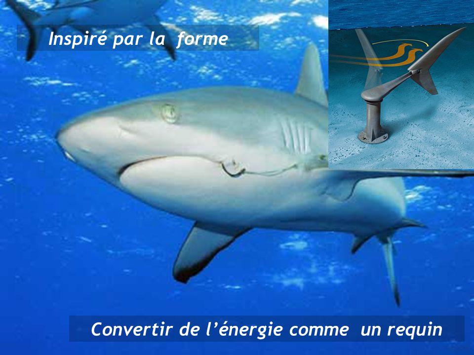 Inspiré par la forme Convertir de lénergie comme un requin