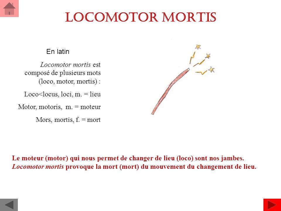 Locomotor mortis En latin Locomotor mortis est composé de plusieurs mots (loco, motor, mortis) : Loco<locus, loci, m.