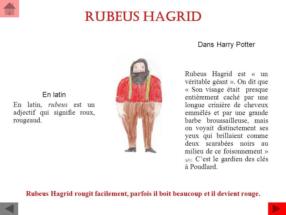Rubeus Hagrid Dans Harry Potter Rubeus Hagrid est « un véritable géant ».