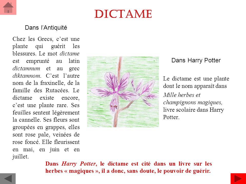 Dictame Dans Harry Potter Le dictame est une plante dont le nom apparaît dans Mille herbes et champignons magiques, livre scolaire dans Harry Potter.