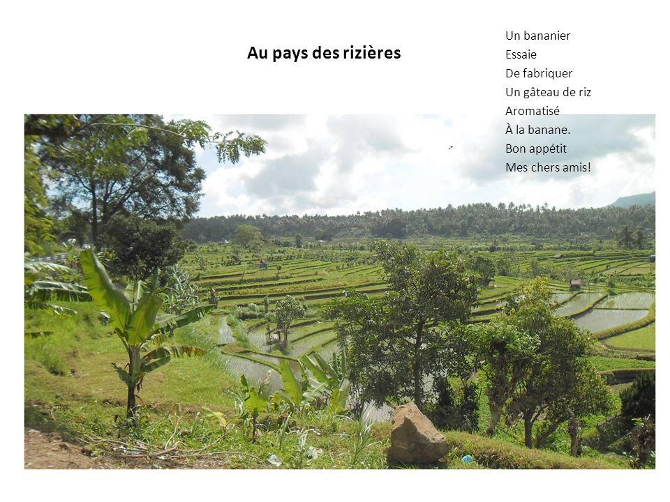 Au pays des rizières Un bananier Essaie De fabriquer Un gâteau de riz Aromatisé À la banane.