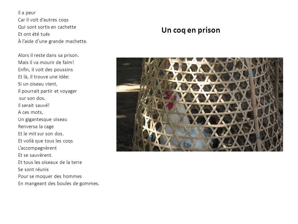 Un coq en prison Il a peur Car il voit dautres coqs Qui sont sortis en cachette Et ont été tués À laide dune grande machette.