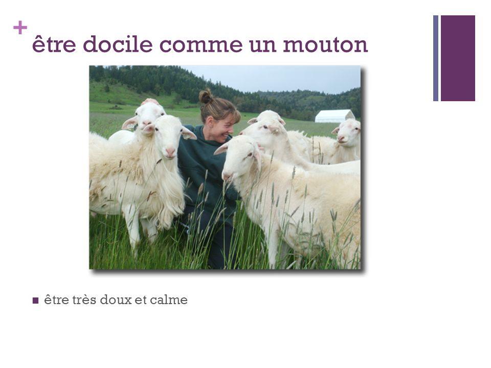 + être docile comme un mouton être très doux et calme
