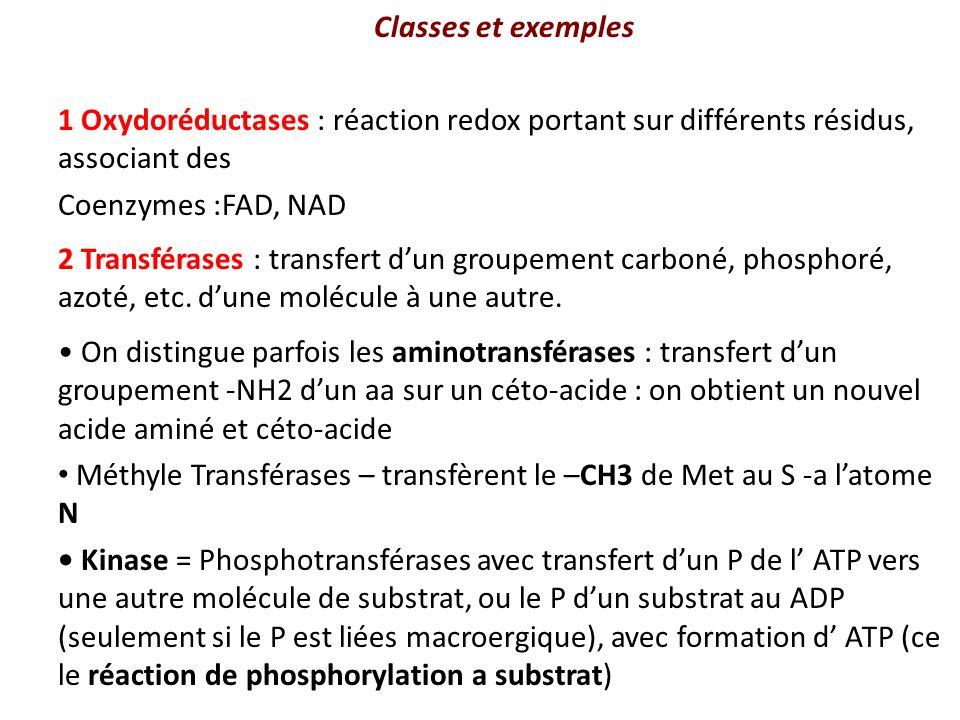 Classes et exemples 1 Oxydoréductases : réaction redox portant sur différents résidus, associant des Coenzymes :FAD, NAD 2 Transférases : transfert dun groupement carboné, phosphoré, azoté, etc.