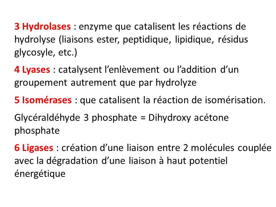 3 Hydrolases : enzyme que catalisent les réactions de hydrolyse (liaisons ester, peptidique, lipidique, résidus glycosyle, etc.) 4 Lyases : catalysent