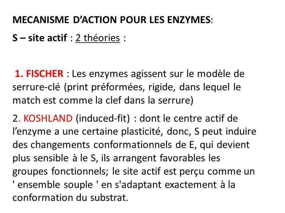 MECANISME DACTION POUR LES ENZYMES: S – site actif : 2 théories : 1. FISCHER : Les enzymes agissent sur le modèle de serrure-clé (print préformées, ri
