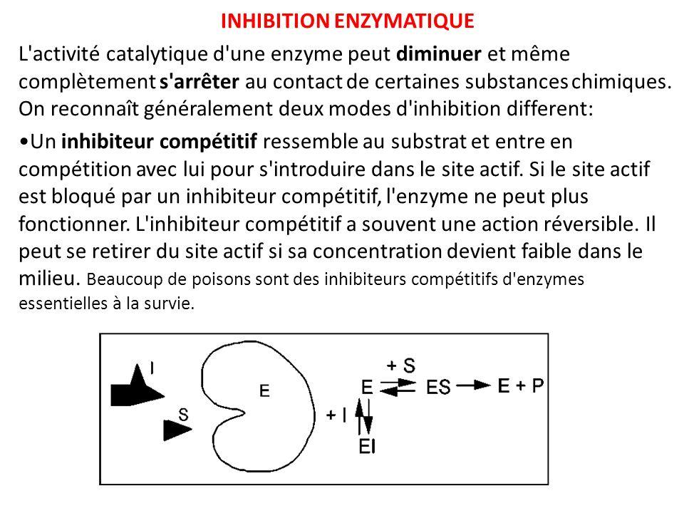 INHIBITION ENZYMATIQUE L'activité catalytique d'une enzyme peut diminuer et même complètement s'arrêter au contact de certaines substances chimiques.