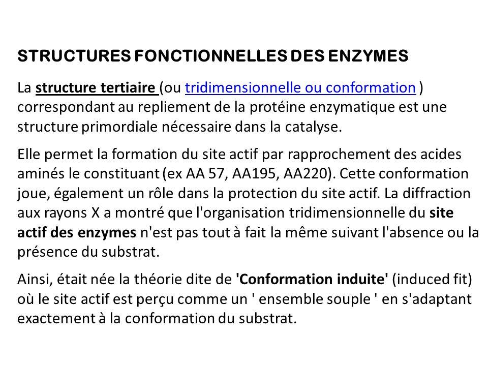 STRUCTURES FONCTIONNELLES DES ENZYMES La structure tertiaire (ou tridimensionnelle ou conformation ) correspondant au repliement de la protéine enzymatique est une structure primordiale nécessaire dans la catalyse.tridimensionnelle ou conformation Elle permet la formation du site actif par rapprochement des acides aminés le constituant (ex AA 57, AA195, AA220).